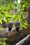 Птицы влюбленности и дерево Стоковые Изображения