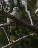 Птицы влюбленности и дерево Стоковые Фото