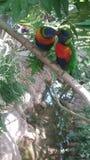 Птицы влюбленности и дерево Стоковое Изображение
