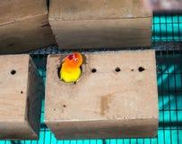 Птицы влюбленности и дерево Стоковое фото RF