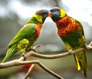 Птицы влюбленности Стоковая Фотография