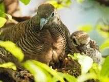 2 птицы в ` s птицы гнездятся, птица младенца с портретом матери Стоковые Изображения