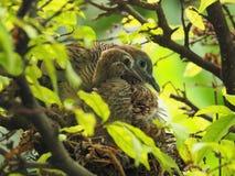2 птицы в ` s птицы гнездятся, птица младенца с портретом матери Стоковая Фотография