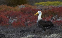 Птицы 13 Галапагос Стоковое Фото