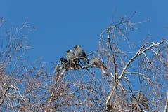 Птицы галки получая теплый в солнце зимы Стоковое Фото