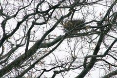 Птицы гнездятся весна или последнее падение в Пенсильванию стоковые фотографии rf