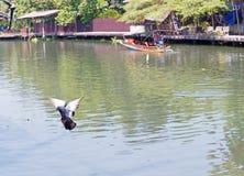 Птицы голубя летая на реку природы неба почти Стоковая Фотография RF