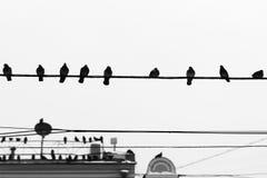 Птицы голубя сидят на проводах и антеннах Стоковая Фотография RF