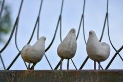 Птицы дерева Стоковые Изображения RF