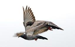 Птицы летания в голубом небе Стоковые Фотографии RF