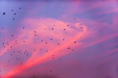 Птицы летают в заход солнца Стоковое Изображение