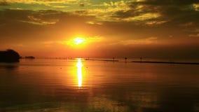 Птицы летают в середине океана с ярким солнцем утра видеоматериал