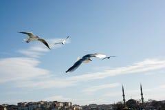 птицы летают в Стамбул Стоковое Фото