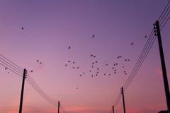 Птицы летают назад к гнезду Стоковые Изображения