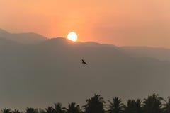 Птицы летают на восход солнца за горами Стоковые Фотографии RF