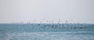 Птицы летают над морем Стоковая Фотография