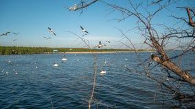 Птицы летают над рекой Стоковое Изображение RF