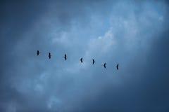 Птицы летают на юг Стоковое фото RF