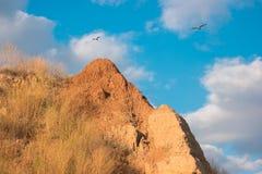 Птицы летают около горы Стоковое Изображение