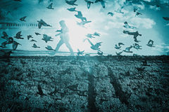 Птицы летают до Солнця Стоковое Изображение RF