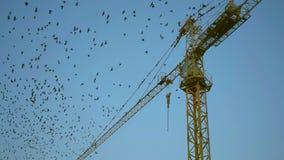 Птицы летают с заграждения крана конструкции сток-видео