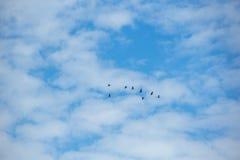 Птицы летают через голубое небо Стоковое Изображение RF
