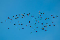 Птицы летают Стоковые Фотографии RF