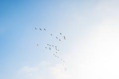Птицы летая в голубое небо весной Стоковая Фотография RF