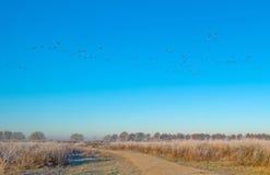 Птицы летая в голубое небо в солнечном свете Стоковые Изображения