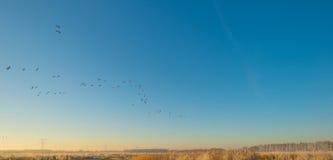 Птицы летая в голубое небо в солнечном свете Стоковое Изображение RF