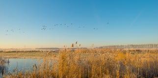 Птицы летая в голубое небо в солнечном свете Стоковые Фото