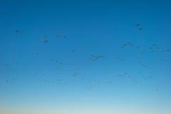 Птицы летая в голубое небо в солнечном свете Стоковое Фото