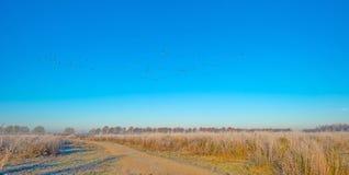 Птицы летая в голубое небо в солнечном свете Стоковые Изображения RF