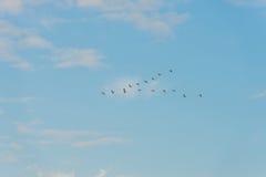 Птицы летая в голубое небо Стоковые Фотографии RF