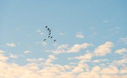Птицы летая в голубое небо Стоковое Изображение RF