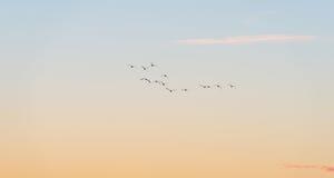 Птицы летая в голубое небо Стоковое фото RF