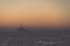 Птицы летая в заход солнца над замороженными морем и маломерным судном - годом сбора винограда Стоковая Фотография