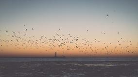 Птицы летая в заход солнца над замороженным морем - винтажное ретро влияние Стоковые Фотографии RF
