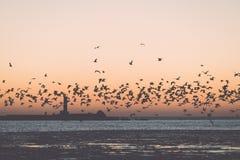 Птицы летая в заход солнца над замороженным морем - винтажное ретро влияние Стоковые Фото