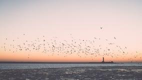 Птицы летая в заход солнца над замороженным морем - винтажное ретро влияние Стоковая Фотография RF