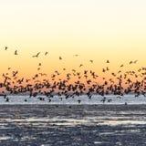 Птицы летая в заход солнца над замороженным морем Стоковая Фотография