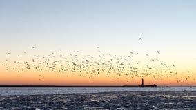 Птицы летая в заход солнца над замороженным морем Стоковое Изображение RF