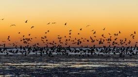 Птицы летая в заход солнца над замороженным морем Стоковые Изображения