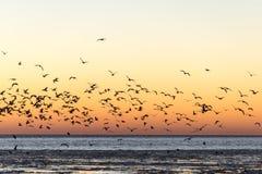 Птицы летая в заход солнца над замороженным морем Стоковое Фото