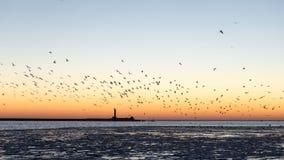Птицы летая в заход солнца над замороженным морем Стоковые Фотографии RF