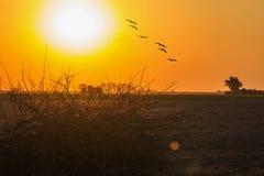 Птицы летая в иллюстрацию sunset Стоковые Изображения