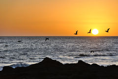 птицы летая заход солнца Стоковое Изображение RF