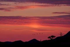 Птицы летая на восход солнца или ландшафт восхода солнца сельский Стоковое Изображение RF