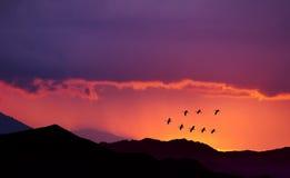 Птицы летая на восход солнца над горами Стоковая Фотография