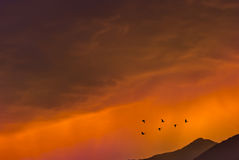 Птицы летая на восход солнца над концепцией осени гор Стоковое Изображение